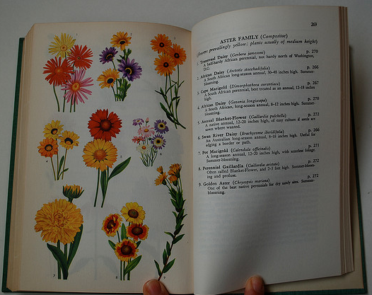 Language of flowers dictionary pdf