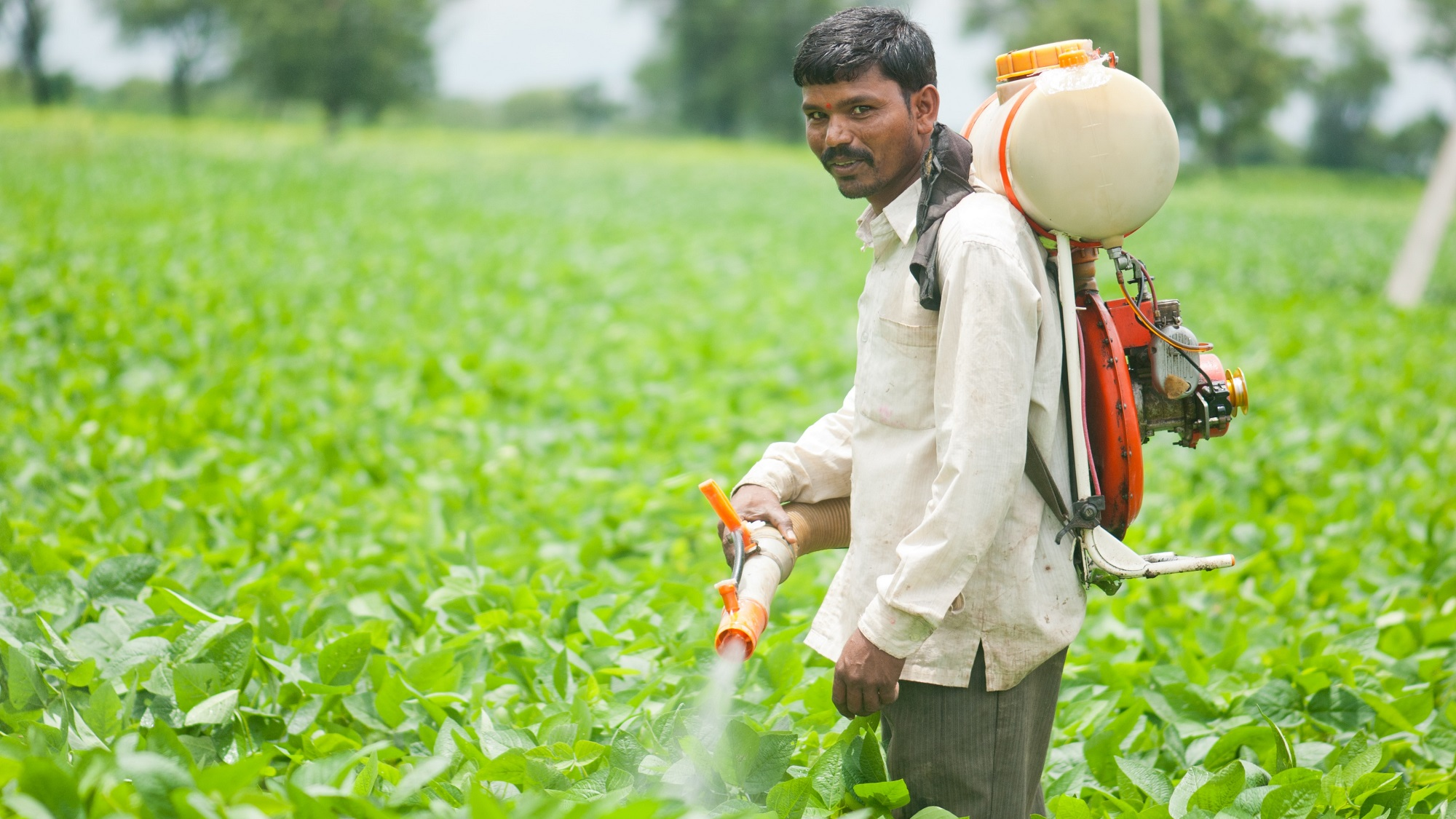 The sample of pesticides application on plants protocol